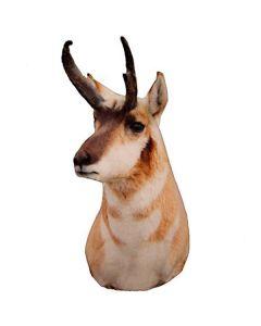 Heads Up Decoy Antelope Buck