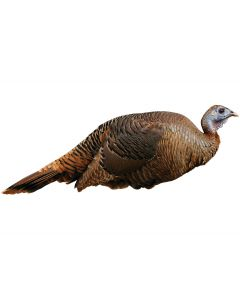 Montana Decoy Spring Fling Turkey Decoy